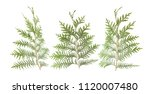 fresh green isolated conifer... | Shutterstock . vector #1120007480