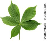 Leaves Of Chestnut Isolated On...