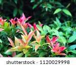 tropical flowers with green... | Shutterstock . vector #1120029998