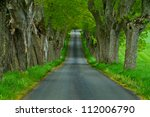 Treelined Country Road