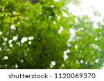 blurred background. raindrops...   Shutterstock . vector #1120069370