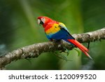 red parrot scarlet macaw  ara... | Shutterstock . vector #1120099520