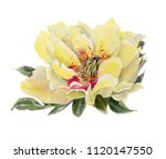 watercolor  flowers isolated on ... | Shutterstock . vector #1120147550