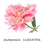 watercolor  flowers isolated on ... | Shutterstock . vector #1120147556