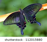Stock photo butterflies and flowers 112015880