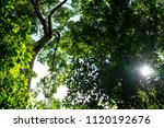 green tree in the forest with... | Shutterstock . vector #1120192676