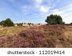 Blooming Heath Landscape At...