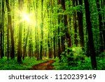 forest trees. nature green wood ... | Shutterstock . vector #1120239149