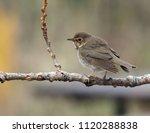 closeup of a medium sized brown ... | Shutterstock . vector #1120288838