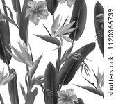 strelitzia reginae blossom also ... | Shutterstock .eps vector #1120366739