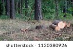 cutting down trees in the forest | Shutterstock . vector #1120380926