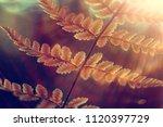 nature beauty flowers  ... | Shutterstock . vector #1120397729