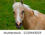 Portrait Of Beautiful Horse On...