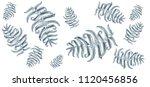 fern frond herbs  tropical... | Shutterstock .eps vector #1120456856