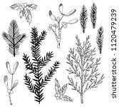 christmas plants set. vector... | Shutterstock .eps vector #1120479239