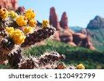 Close Up Of Of A Desert Cactus...