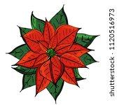 Christmas Star Flower Isolated...