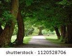 Dark Green Forest  Path Trough...