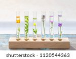 test tubes with perfume... | Shutterstock . vector #1120544363