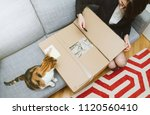cat and woman unboxing... | Shutterstock . vector #1120560410