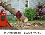 manual worker removing tree in... | Shutterstock . vector #1120579760