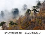 autumn scene with foggy forest in mountains - stock photo