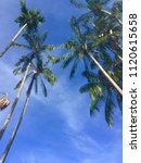 Small photo of Areca nut trees blue sky white cloud green leaves on the beach