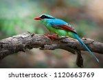 common green magpie  cissa... | Shutterstock . vector #1120663769