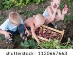 happy village children help to... | Shutterstock . vector #1120667663