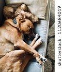 sleepy dog snuggled up on sofa... | Shutterstock . vector #1120684019