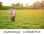 indian farmer at the chickpea... | Shutterstock . vector #1120687514