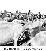 ethiopia bablile circa january...   Shutterstock . vector #1120747433