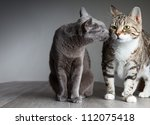 Portrait Of Russian Blue And...