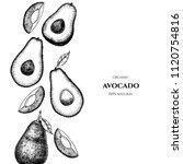 vector frame with avocado. hand ... | Shutterstock .eps vector #1120754816