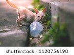 close up little skinny poor... | Shutterstock . vector #1120756190