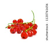 fresh  nutritious and tasty red ... | Shutterstock .eps vector #1120761656