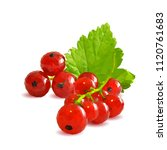 fresh  nutritious and tasty red ... | Shutterstock .eps vector #1120761683