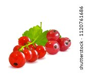 fresh  nutritious and tasty red ... | Shutterstock .eps vector #1120761686