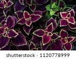 colorful leaves pattern leaf... | Shutterstock . vector #1120778999