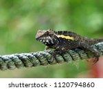beautiful lizard resting on the ... | Shutterstock . vector #1120794860