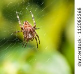 a female orb weaver spider sits ... | Shutterstock . vector #112083368