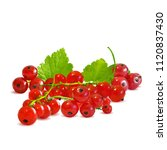 fresh  nutritious and tasty red ... | Shutterstock .eps vector #1120837430