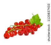 fresh  nutritious and tasty red ... | Shutterstock .eps vector #1120837433