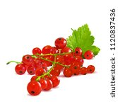 fresh  nutritious and tasty red ... | Shutterstock .eps vector #1120837436