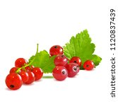 fresh  nutritious and tasty red ... | Shutterstock .eps vector #1120837439