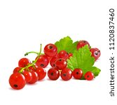 fresh  nutritious and tasty red ... | Shutterstock .eps vector #1120837460