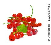 fresh  nutritious and tasty red ... | Shutterstock .eps vector #1120837463