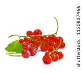 fresh  nutritious and tasty red ... | Shutterstock .eps vector #1120837466