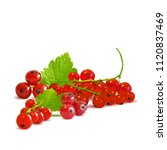 fresh  nutritious and tasty red ... | Shutterstock .eps vector #1120837469