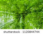 Small photo of Abstract green background, tree in countryside outdoors. Zoom speed blured motion. Created by zooming out.
